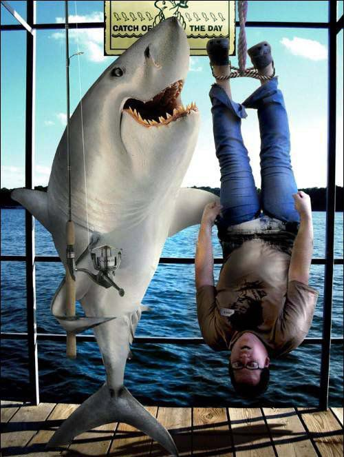 Le grand requin blanc : Carcharodon carcharias