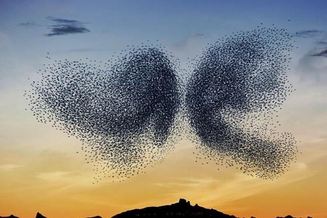 synchronisme-vol-d-oiseaux.jpg