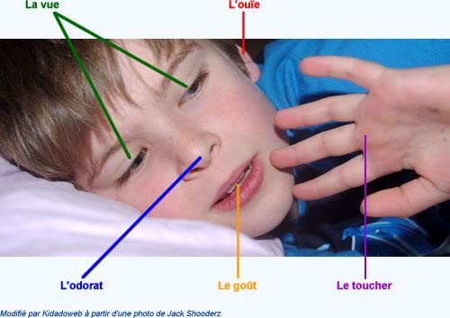 cinq-sens-enfant.jpg