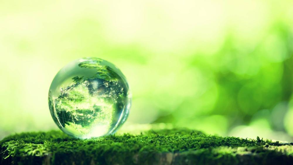 mundo-verde-vegetacao-aumenta.jpg