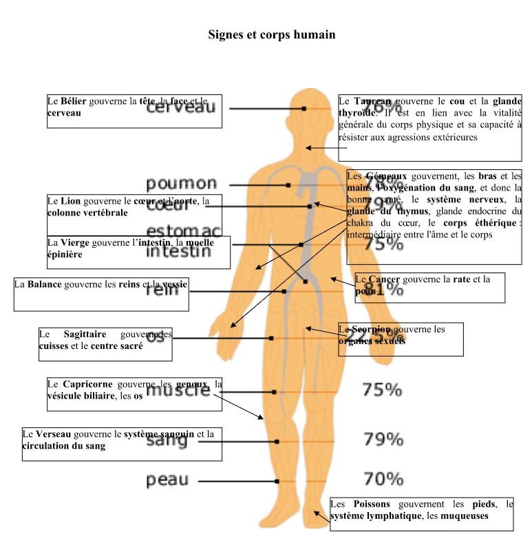 .. signes et corps humain.jpg