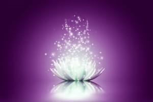 lotus-violet2-300x199.jpg
