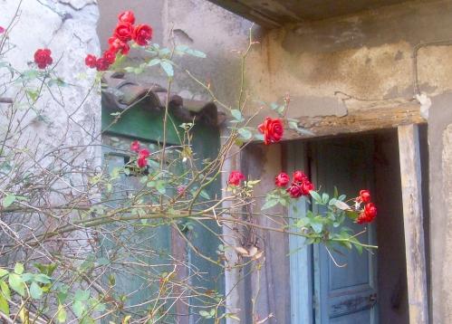 RosesFeb.JPG