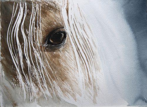 L'œil du cheval,