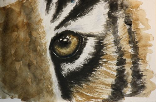 The eye of the tiger