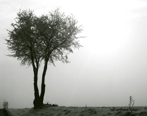 004 tree 2.jpg