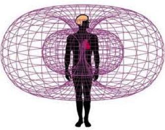Champ magnétique du coeur.jpg