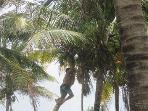 tulum-sur la plage (26).JPG