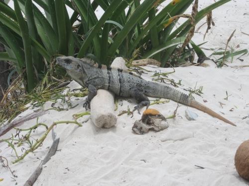 tulum-sur la plage (27).JPG