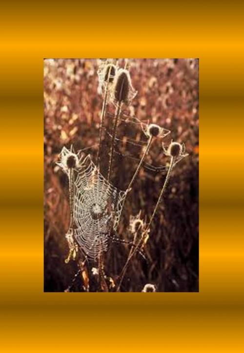 Univers toile d'araignée.jpg