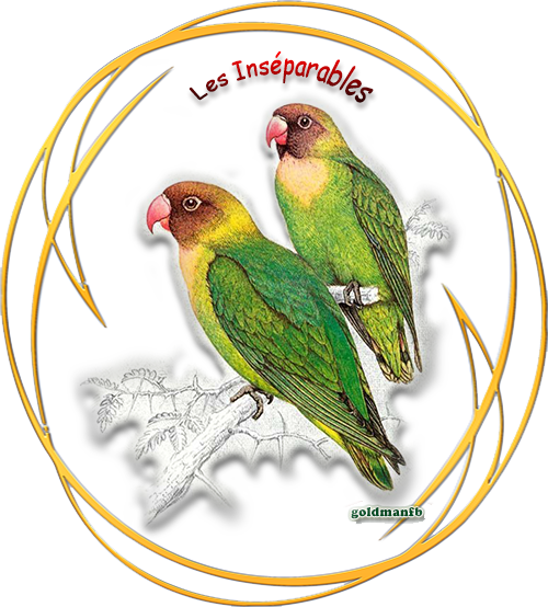 https://static.blog4ever.com/2012/09/713297/Les-Inseparables.png