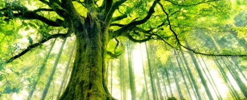 les_plus_beaux_arbres_du_monde_hetre_de_ponthus-740x300.png