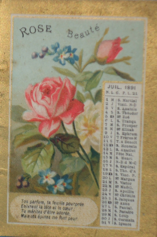 rose beaute.jpg