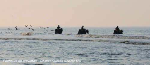 Pêcheurs crevettes140909js159w.JPG