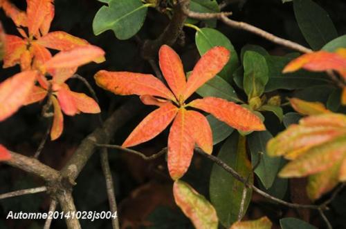 Image d'automne141028js004w.JPG