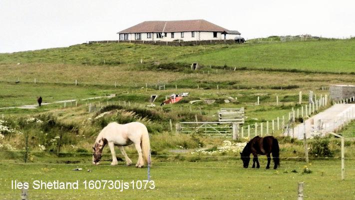 Shetland 160730js1073w.JPG