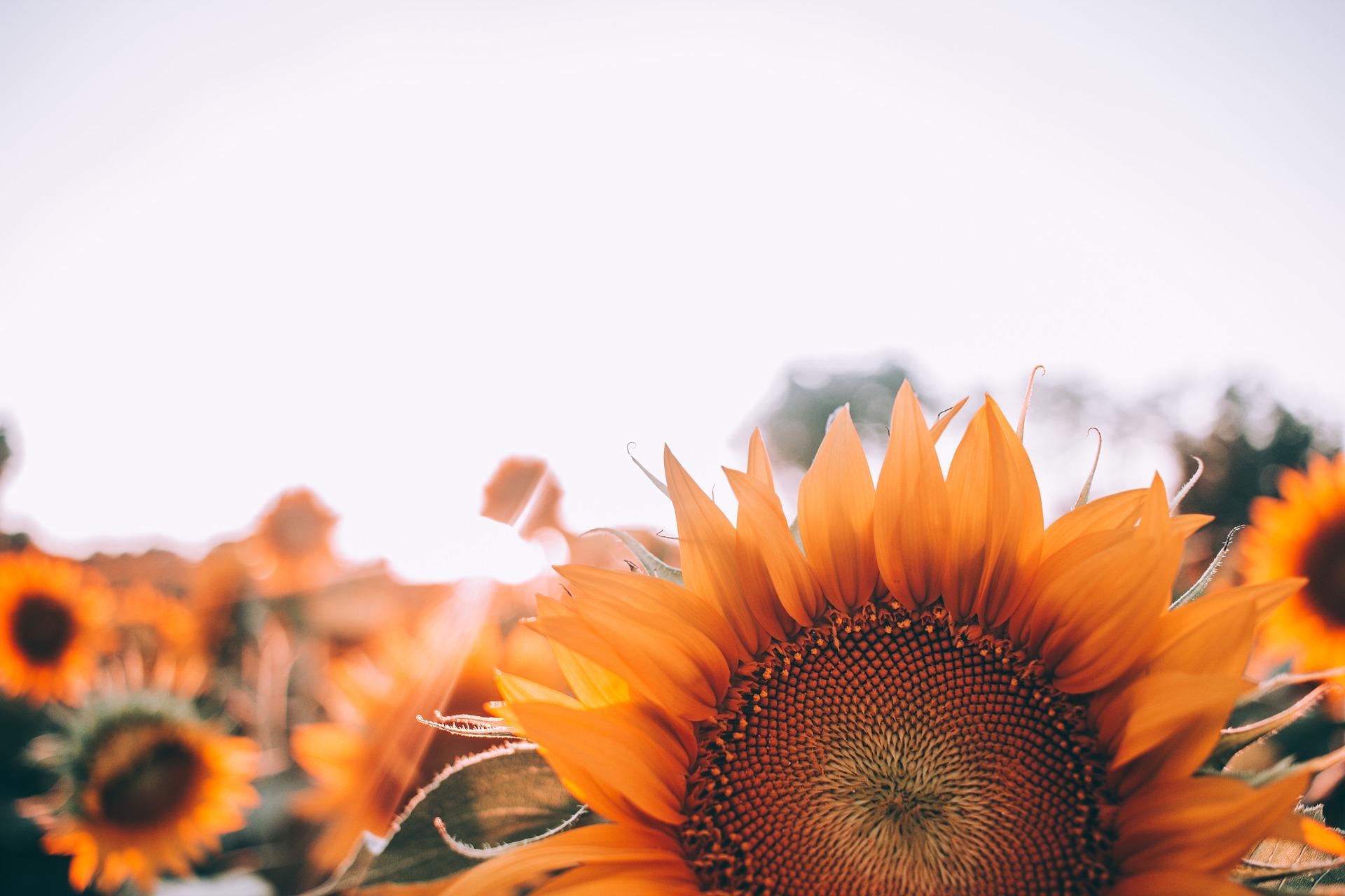 bloom-1866760_1920.jpg