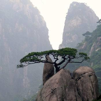 mont huang-shan-chine.jpg