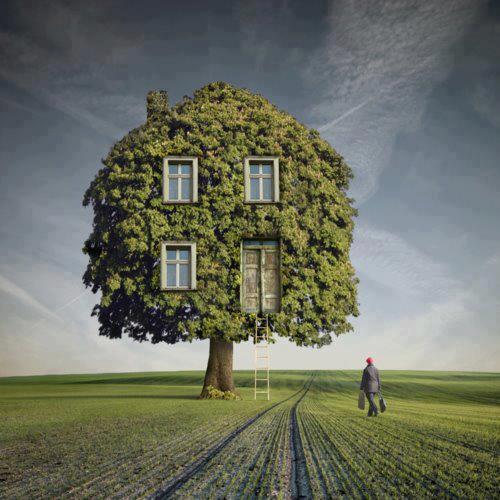 maison arbre 01.jpg