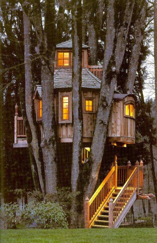 maison dans l'arbre 01.jpg