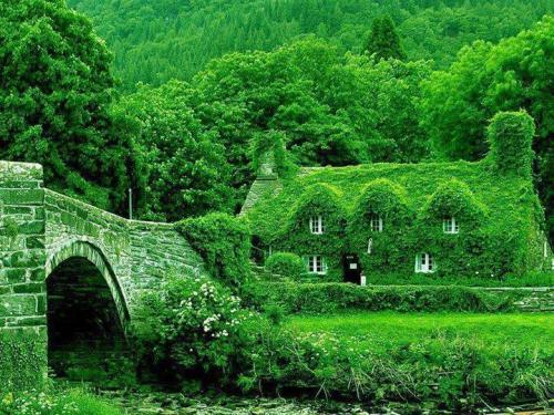 Maison Verte.jpg