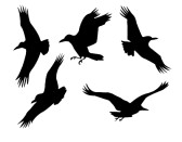 corbeau-groupe-isole-sur-fond-blanc.jpg