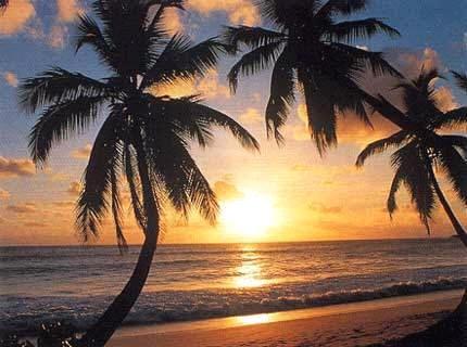 île tropicale.jpg