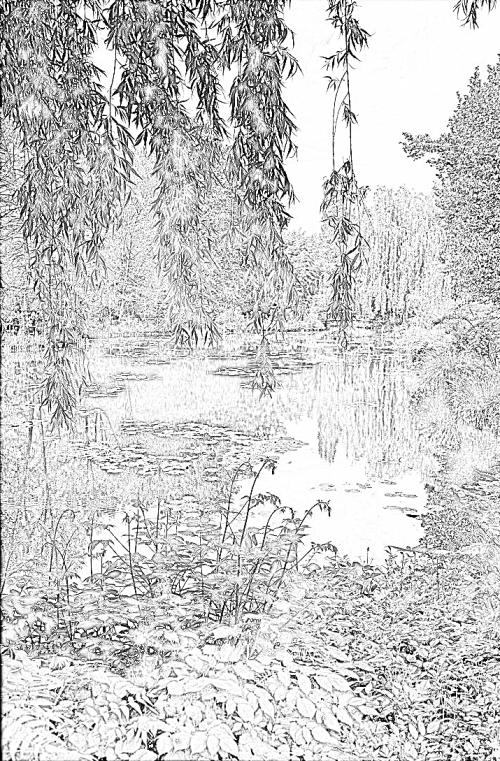 bassin-aux-nympheas-2.png