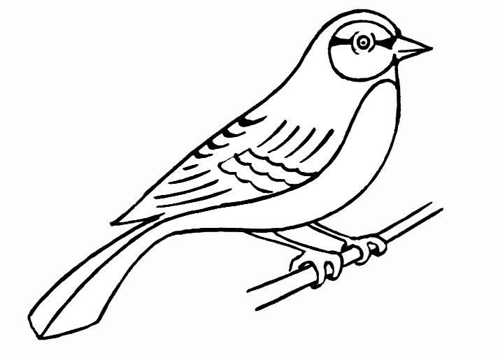 Coloriage Oiseau.JPG