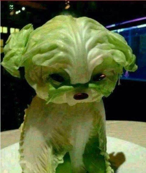 Chien de salade salade de chien.jpg
