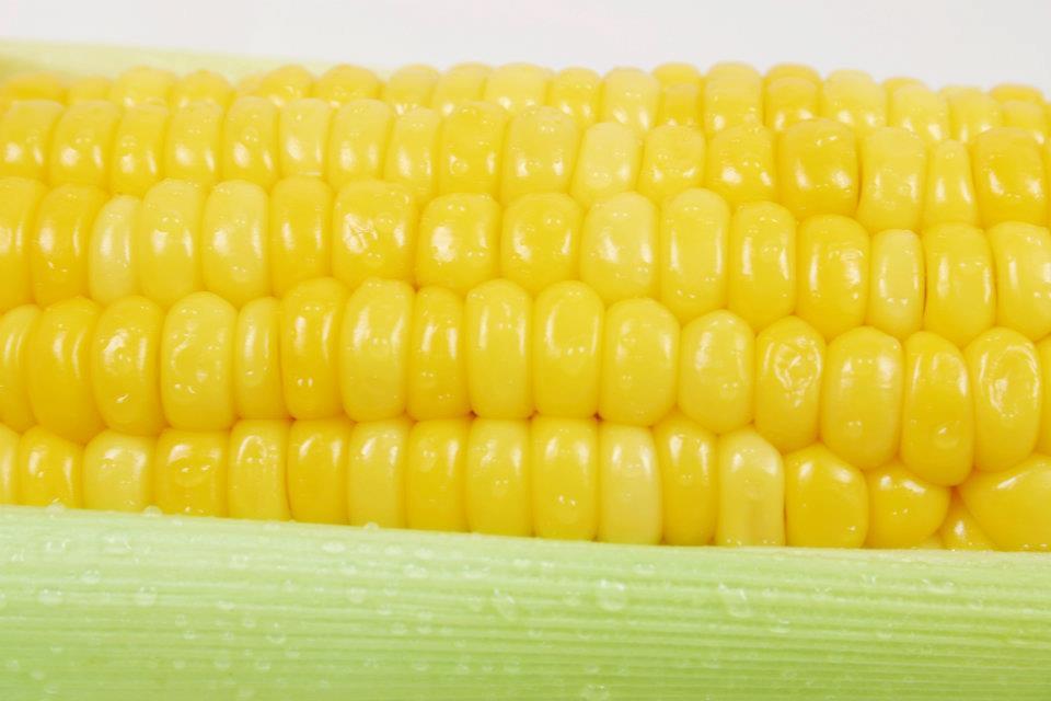 maïs 01.jpg