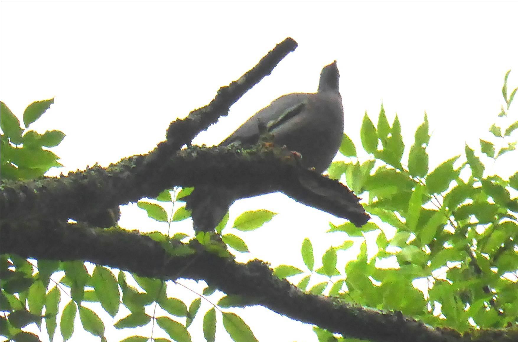 Ornithologie Sortie M-Françoise - Juin 2016 12.jpg