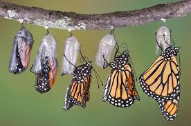 Sortie du papillon.jpg