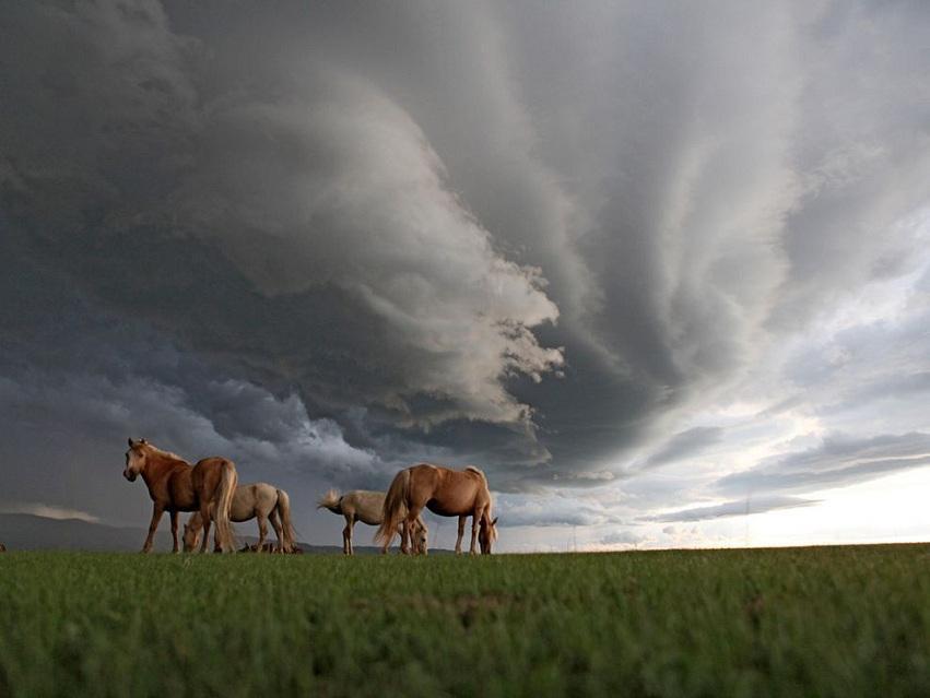 Mongolia 02.jpg