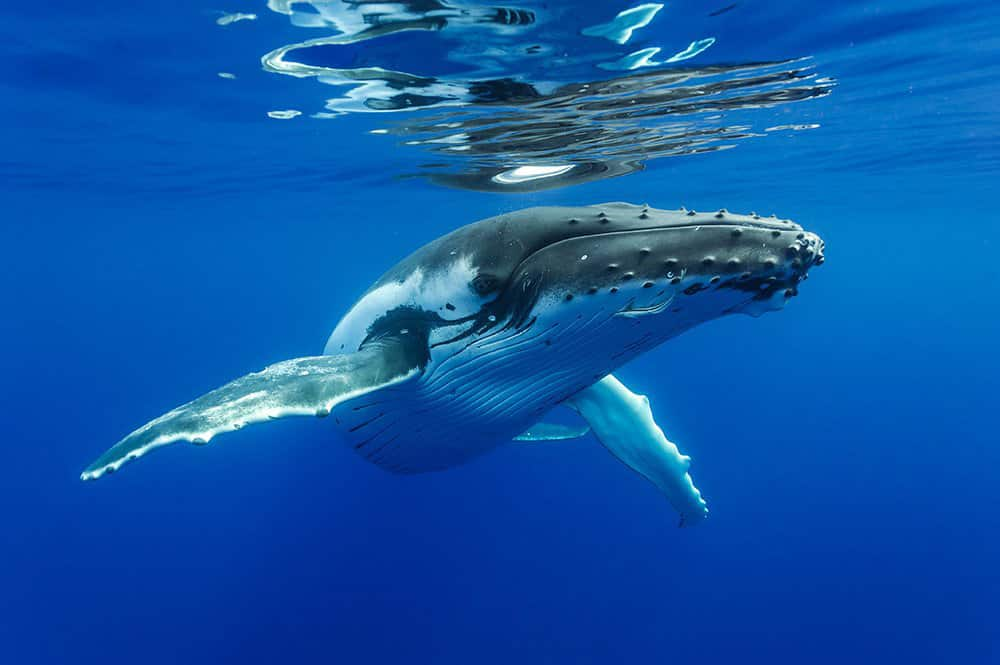 baleine-bosse-sylvian-girardot-6157.jpg