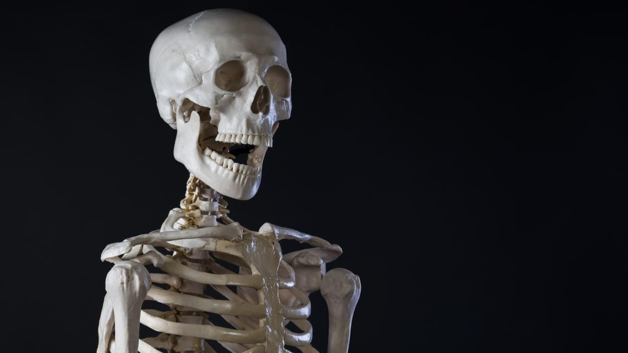 squelette-humain.jpg