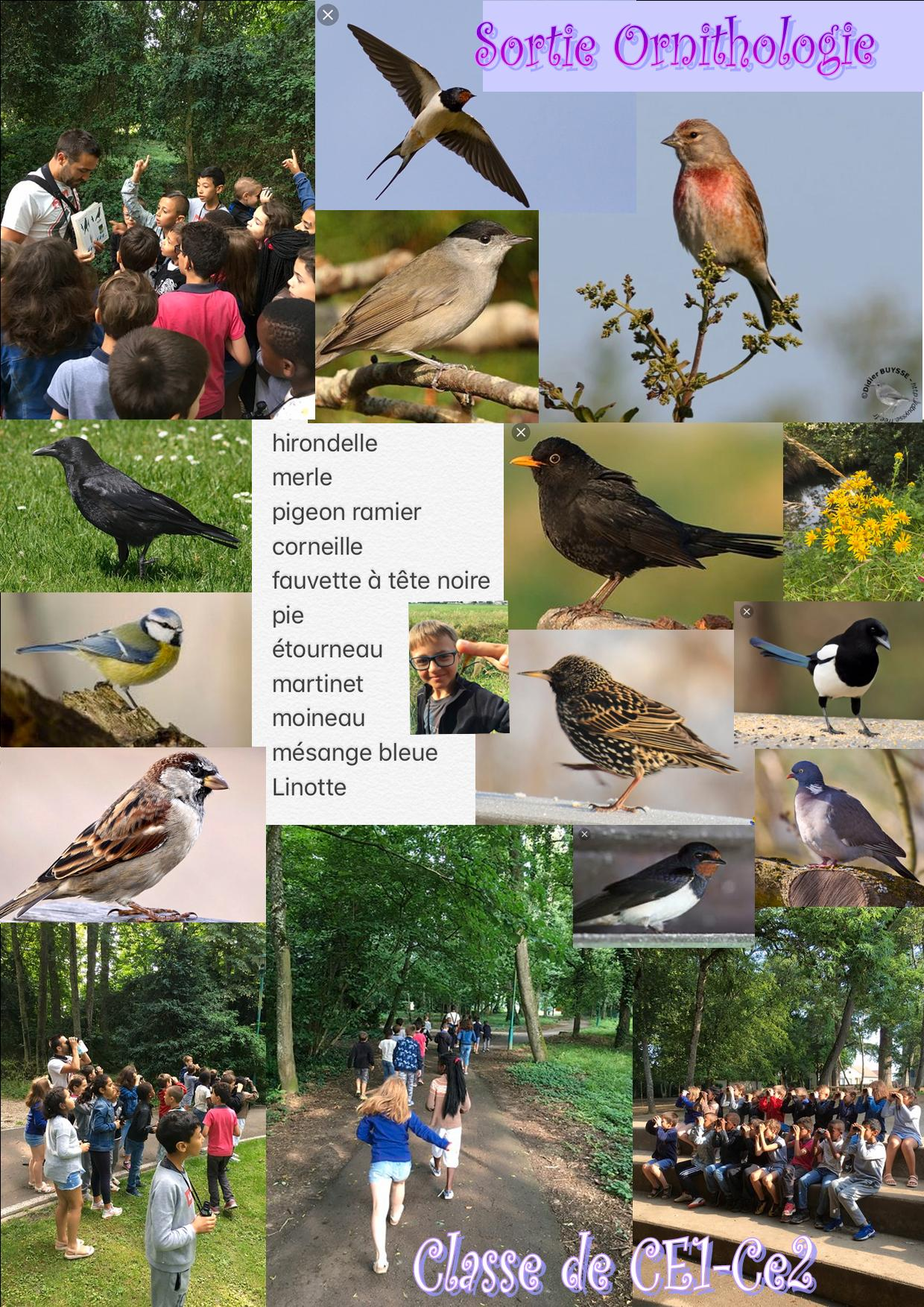 Affiche Sortie Ornithologie.jpg