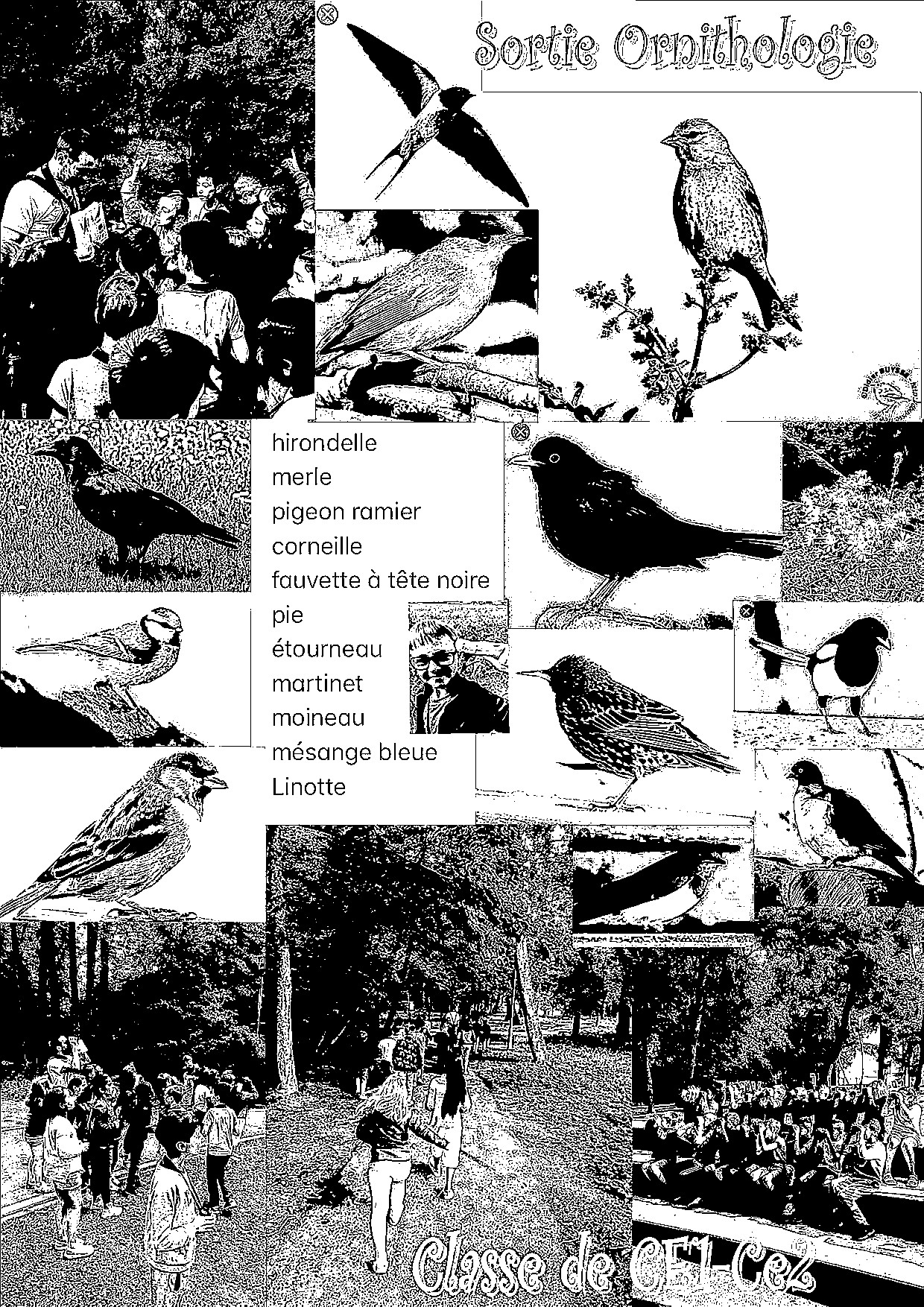 Affiche Sortie Ornithologie 11.jpg