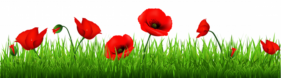 poppy-clipart-transparent-background-5.png