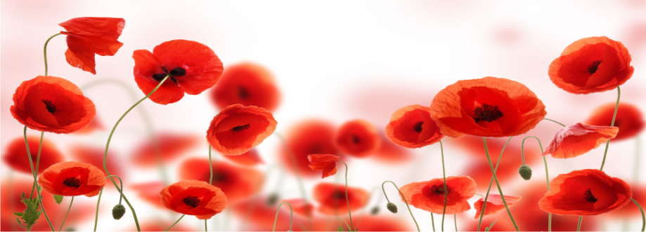 Coquelicots z.png