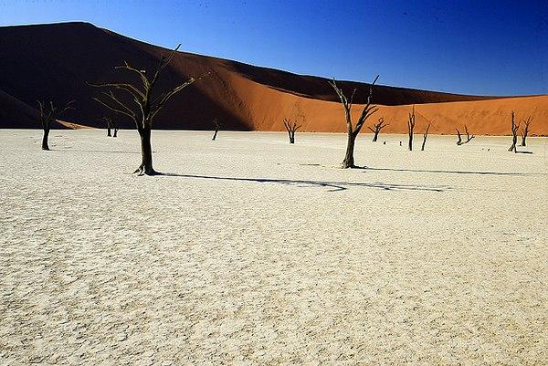 2015-Namibie-arbres-desert.JPG