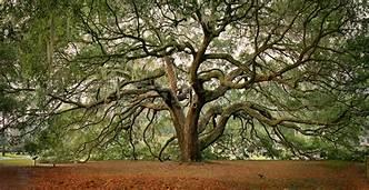 arbre majestueux.jpg