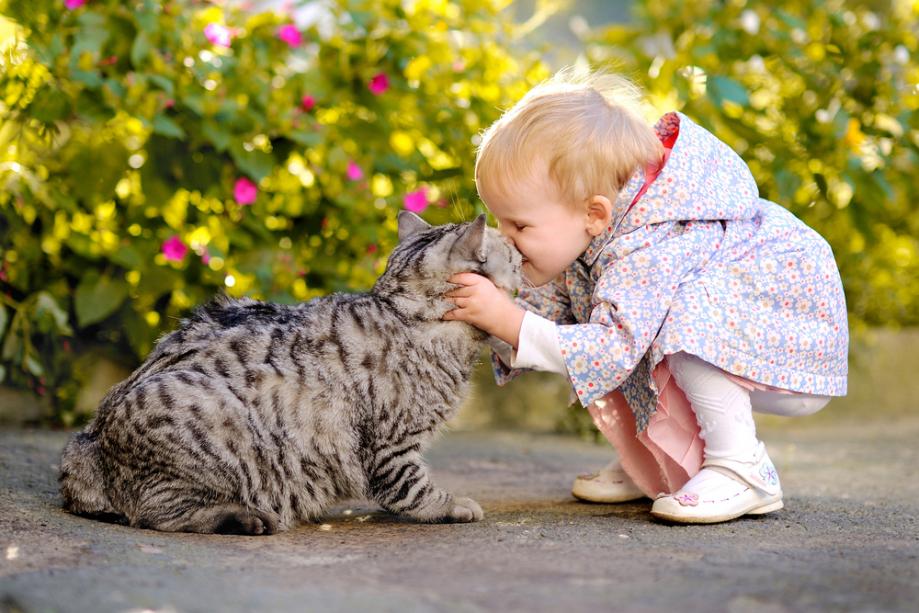 Enfant et animaux 01.jpg