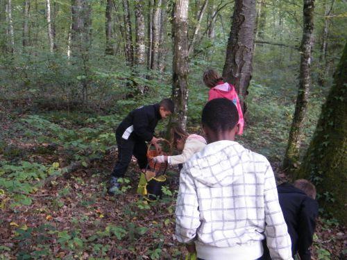 Dans les bois à la cueillette de champignons