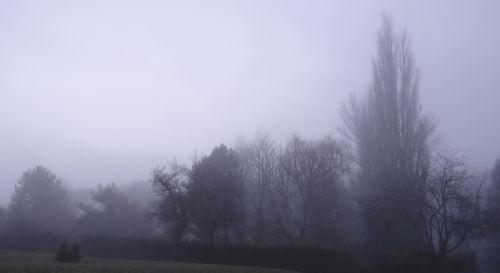 Quetigny - Parc des Cèdres - Matin brumeux - Janvier 2013