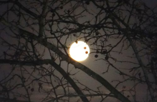 Quetigny - Dijon - Lune embrumée - Janvier 2013