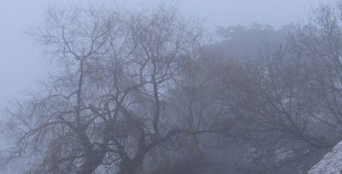 Ecole les Cèdres - 14 février 2013 - Matin brumeux