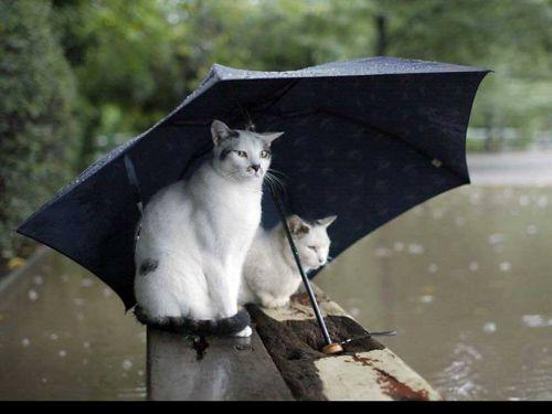 A l'abri sous le parapluie