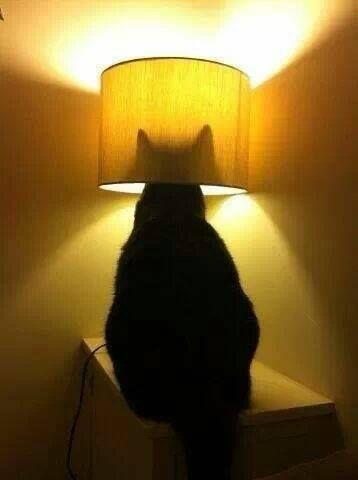 Chat lampe de chevet