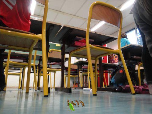 L'école des Cèdres vue par une fourmi